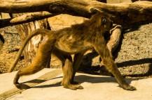 paryż zoo-11 (Kopiowanie)