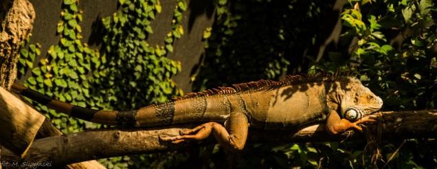 paryż zoo-31 (Kopiowanie)