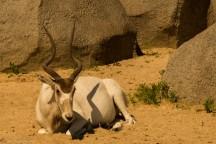 paryż zoo-7 (Kopiowanie)