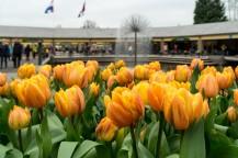 amsterdam kwiecień -6 (Kopiowanie)