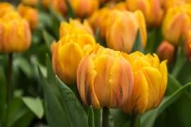 amsterdam kwiecień -2 (Kopiowanie)