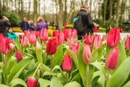 amsterdam kwiecień -3 (Kopiowanie)