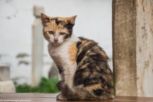 Novi Pazar - koty