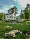 Cetynia - Cerkiew na Cipurze i wylegujący się pies