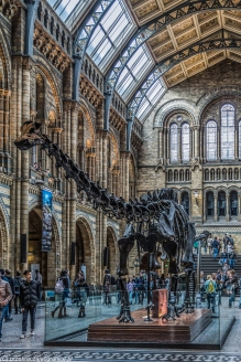 Londyn - Natural History Museum, szkielet dinozaura