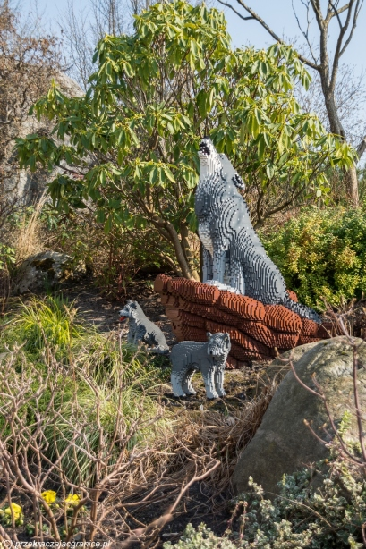 Legoland - wilcza rodzinka