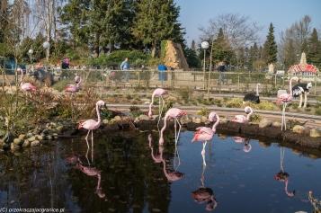 Legoland - flamingi na wypasie