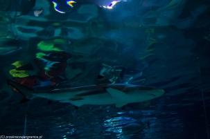 Legoland - ten rekin jest prawdziwy