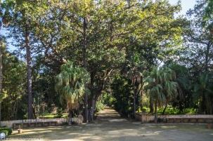 Palermo - alejki w Ogrodzie Botanicznym