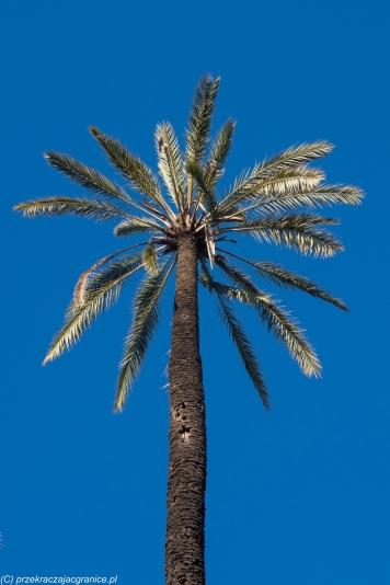 Palermo - palma odbiła w Ogrodzie Botanicznym