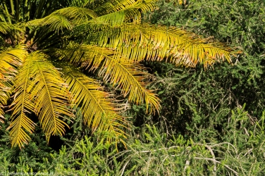 Palermo - kolory Ogrodu Botanicznego