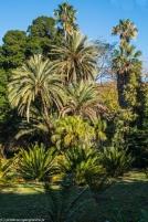 Palermo - Ogród Botaniczny, w świecie zieleni