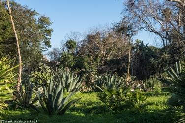 Palermo - Ogród Botaniczny, zieleń wszędzie
