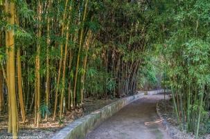 Palermo - Ogród Botaniczny