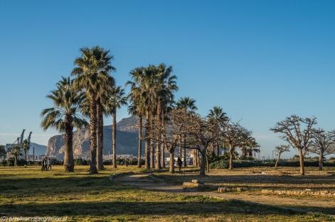 Palermo - palmy nad bulwarami