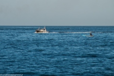 Palermo - widok na morze