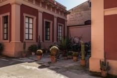 Palermo - kaktusy schowane w cieniu