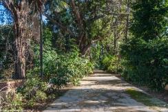 Palermo - alejki Ogrodu Botanicznego