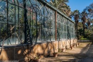 Palermo - widok na Palmiarnię