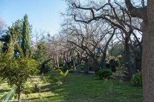 Palermo - zieleń w Ogrodzie Botanicznym