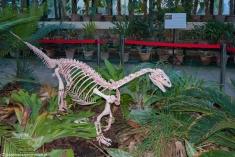 Palermo - mały drapieżnik w Ogrodzie Botanicznym