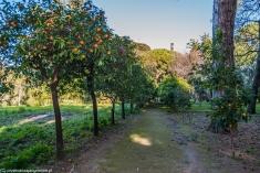 Palermo - Ogród Botaniczny, aleja cytrusów