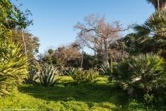 Palermo - zieleń Ogrodu Botanicznego