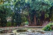 Palermo - sadzawka w Ogrodzie Botanicznym