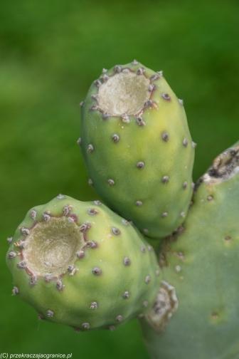 Segesta - okoliczna roślinność