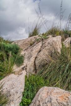 Segesta - kamieniste podłoże