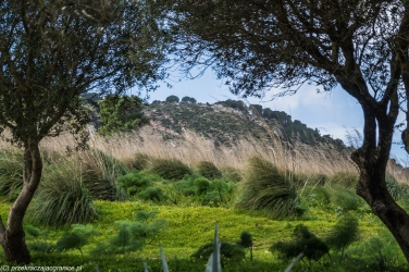 Segesta - trawy poddają się wiatrowi