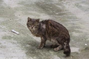 Trapani - internet lubi koty ;)